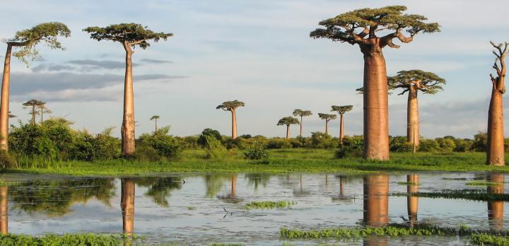 Voyage sur-mesure, Ghislaine partage avec nous son voyage à Madagascar
