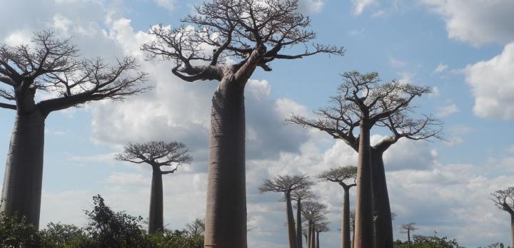 Voyage sur-mesure, Voyage à Madagascar sous la plume de Gérard