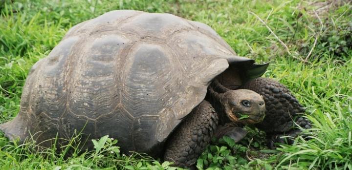Voyage sur-mesure, Nolwenn vous fait découvrir les Galapagos