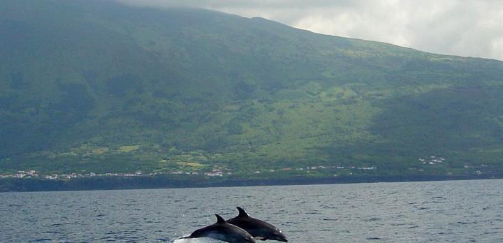 Voyage sur-mesure, Partez observer la faune marine aux Açores !