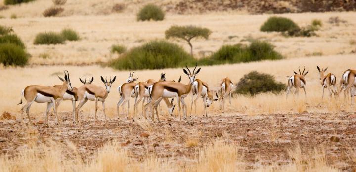 Voyage sur-mesure, Namibie, Le récit d'un voyage de repérage par notre conseillère Nolwenn