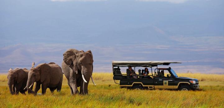 Voyage sur-mesure, L'essentiel des parcs de Tanzanie en safari