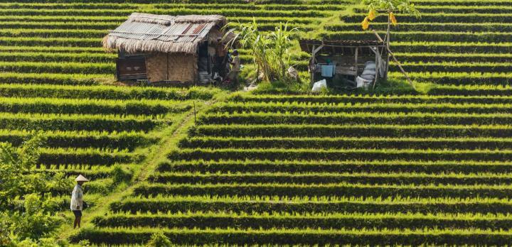 Voyage sur-mesure, Immersion aux Célèbes et Bali