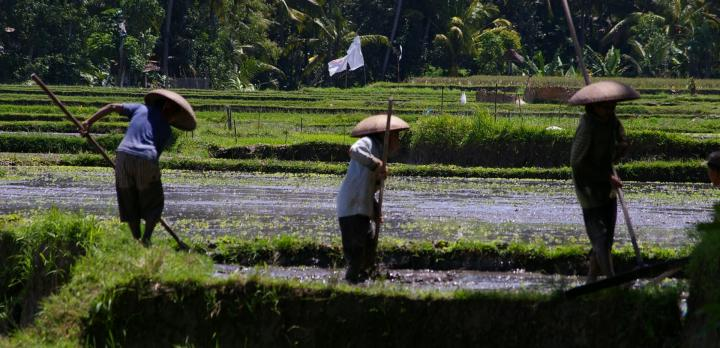 Voyage sur-mesure, Chez l'habitant à Bali