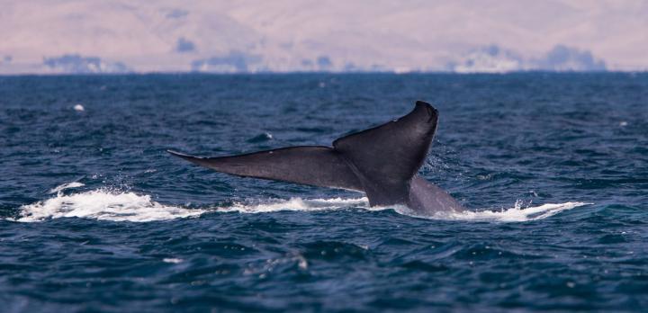 Voyage sur-mesure, Voyage famille avec observation de baleines en Norvège