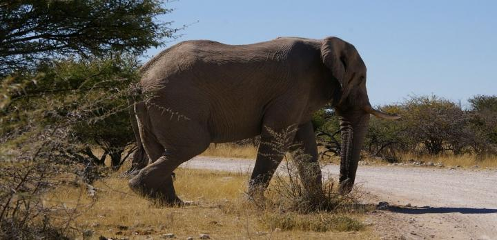 Voyage sur-mesure,  Safari en Namibie