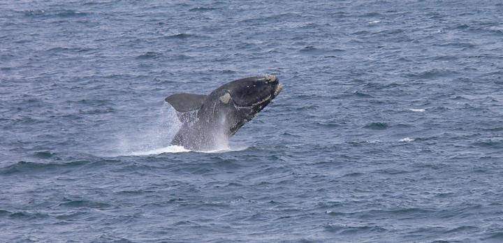 Voyage sur-mesure, Observez les baleines d'Afrique du Sud