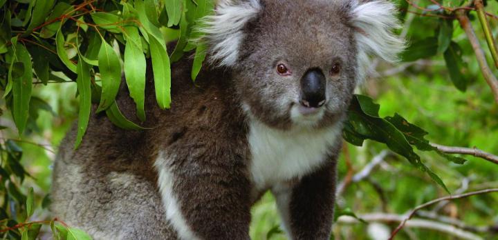Voyage sur-mesure, Voyage famille en Australie de Kangaroo Island à la Grande Barrière de Corail