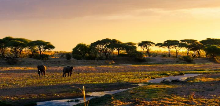 Voyage sur-mesure, La Tanzanie du Sud en français et séjour à Zanzibar