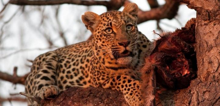 Voyage sur-mesure, Voyage de noce en Afrique du Sud