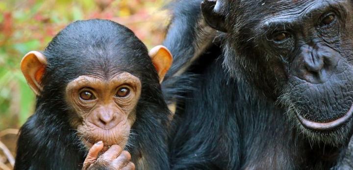 Voyage sur-mesure, Safari Sud Tanzanie en avion & Rencontre avec les Chimpanzés de Tanzanie