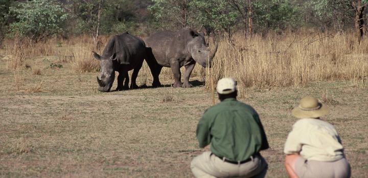Voyage sur-mesure, Voyage safari de luxe au Zimbabwe