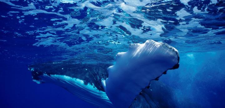 Voyage sur-mesure, Exploration de Tahiti aux Iles Australes
