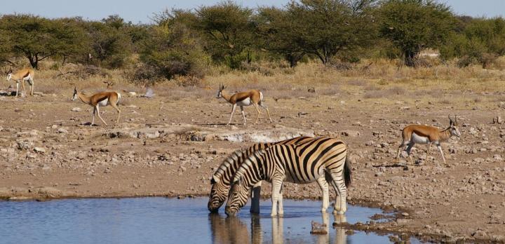 Voyage sur-mesure, Safari