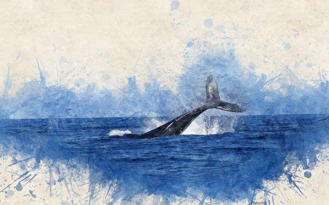 Voyage sur-mesure, Observer les baleines de La Réunion...