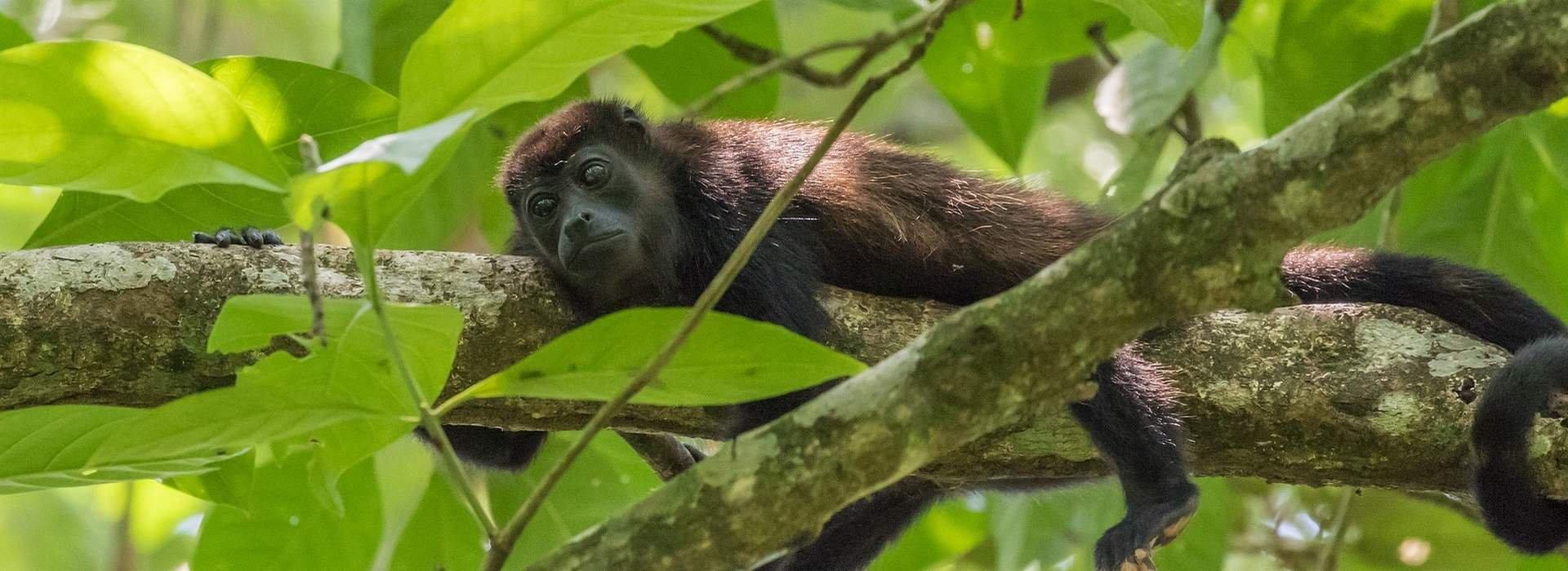 Voyage sur-mesure, Costa Rica