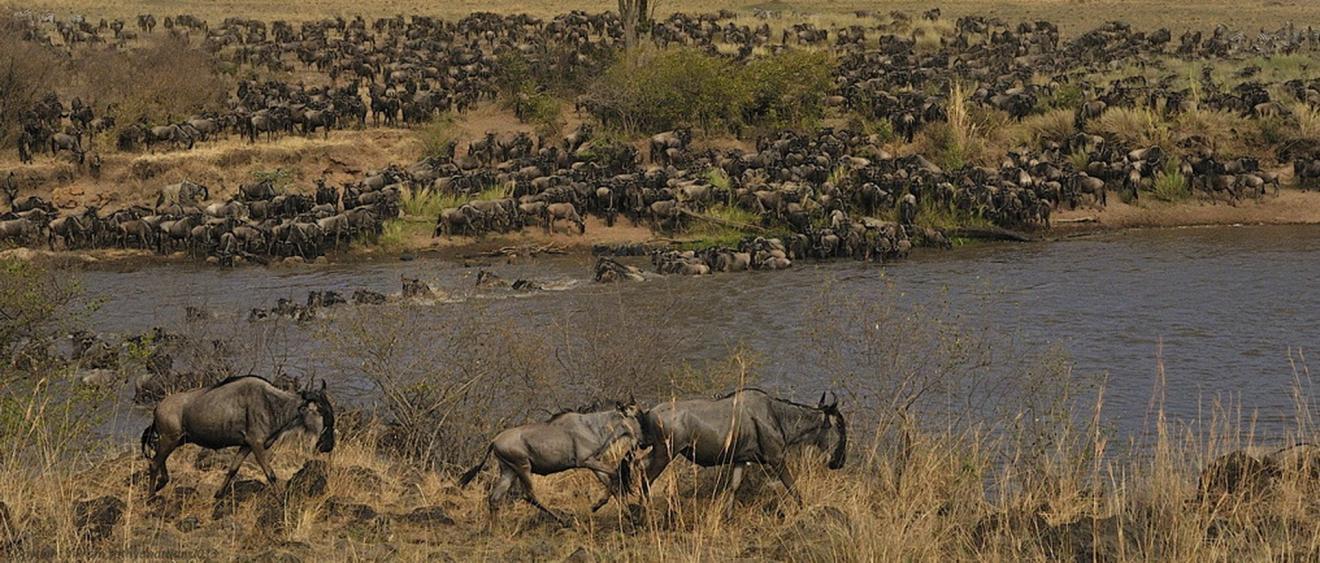 Voyage sur-mesure, Kenya