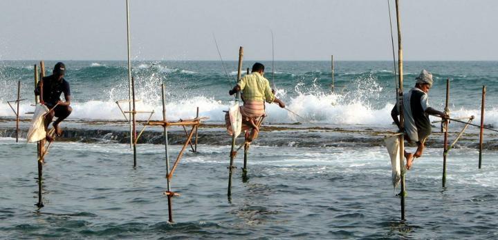 Voyage sur-mesure, De retour du Sri Lanka