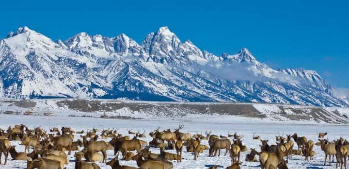 Voyage sur-mesure, Yellowstone en hiver