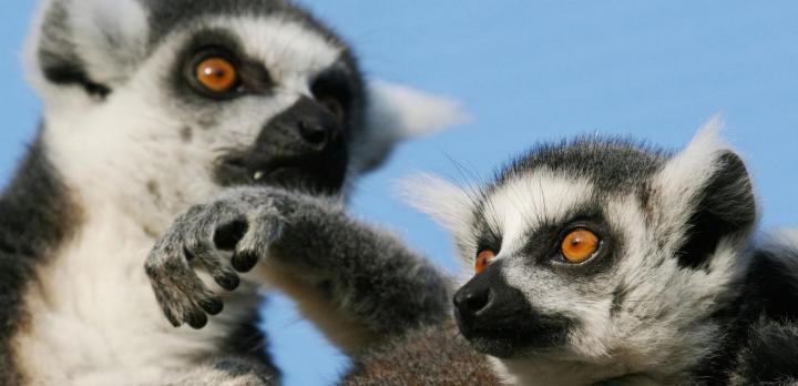 Voyage sur-mesure, Interview de nos spécialistes Madagascar après leur voyage de repérage