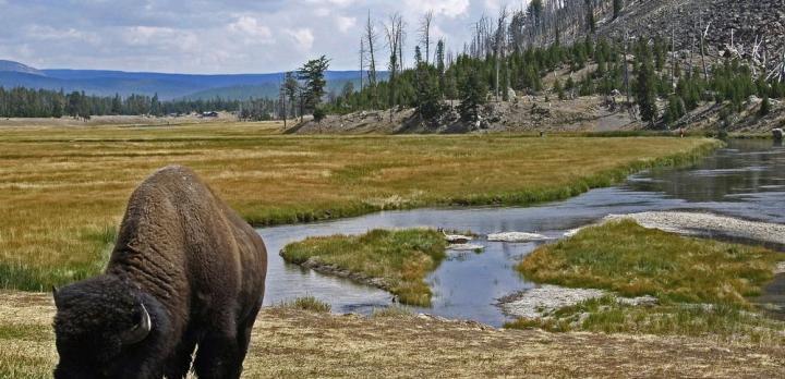 Voyage sur-mesure, Les incendies dans Yellowstone, garants de la biodiversité ?