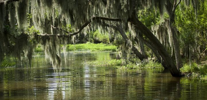 Voyage sur-mesure, Combiné Texas & Louisiane : les Etats-Unis hors des sentiers battus