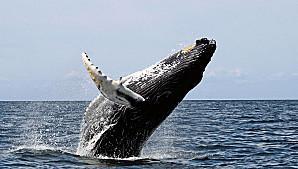 Voyage sur-mesure, A la rencontre des baleines des îles Mingan