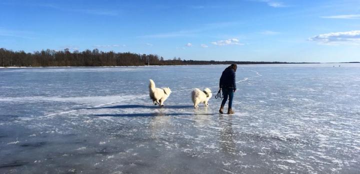 Voyage sur-mesure, La Laponie en hiver pour un séjour multi-activités !