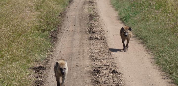 Voyage sur-mesure, Lise, tu nous racontes ton tout premier safari?