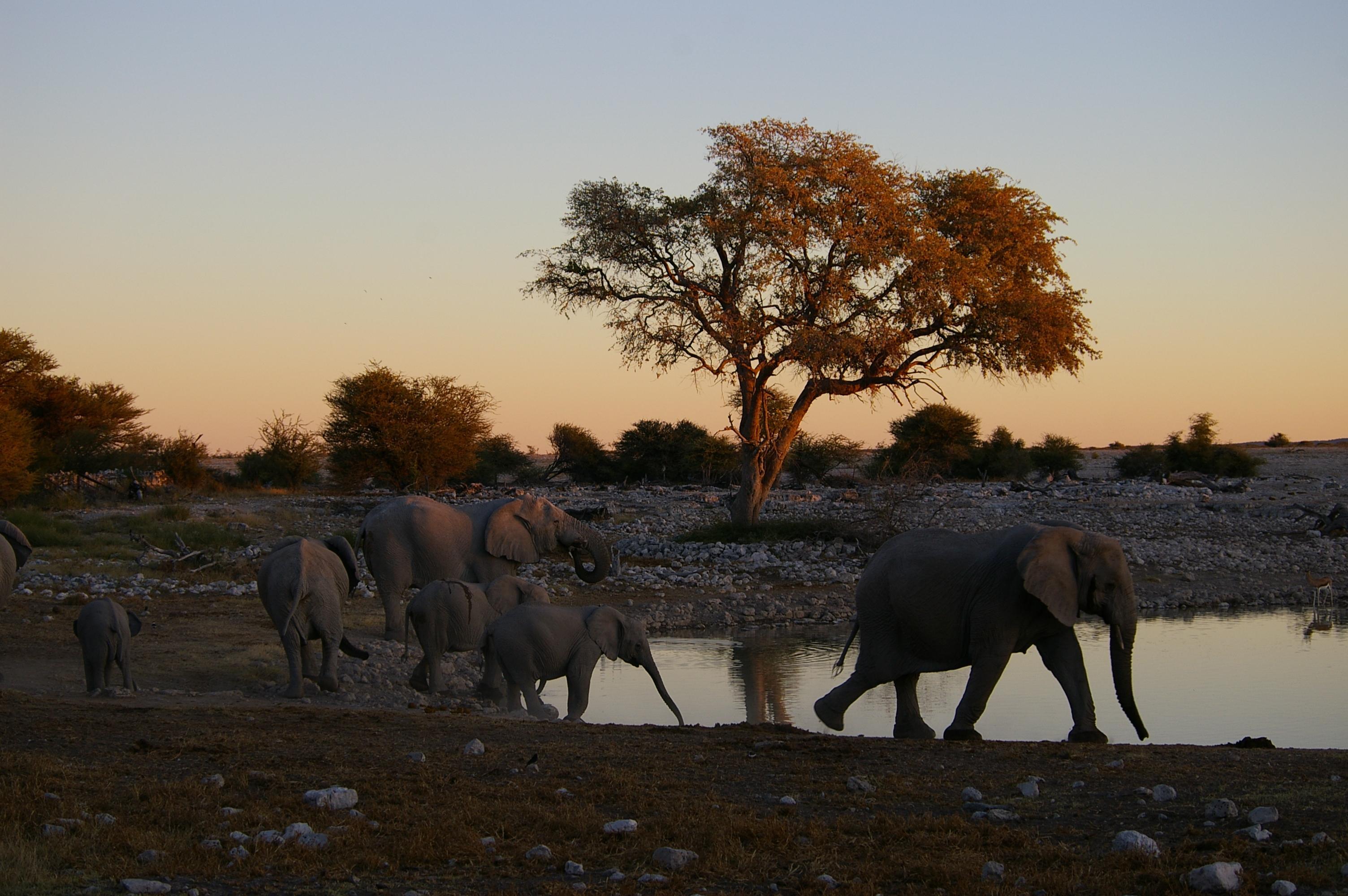 Voyage sur-mesure, Les conseils de Stéphanie pour un safari réussi