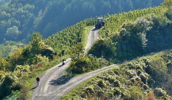 Voyage sur-mesure, Conduite de tracteur vintage