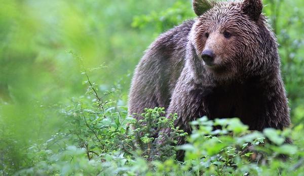Voyage sur-mesure, Observation des ours