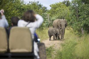 Voyage sur-mesure, Kapama Private Game Reserve