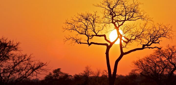 Voyage sur-mesure, Parc Kruger