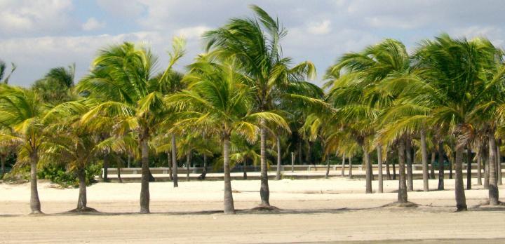 Voyage sur-mesure, Visiter la Floride