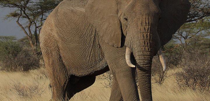 Voyage sur-mesure, Safari au Kenya : la grande boucle