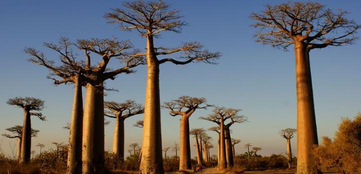 Voyage sur-mesure, La N7 et l'allée des Baobabs