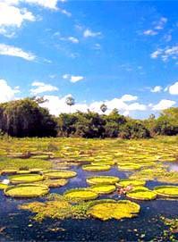 Voyage sur-mesure, Au coeur du Parc Amazonien de Madidi