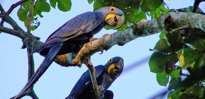 Voyage sur-mesure, Ecosystème du Pantanal