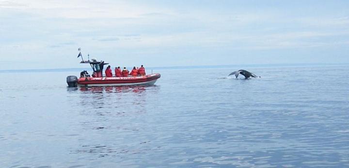 Voyage sur-mesure, Observation et étude des baleines
