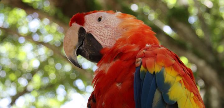 Voyage sur-mesure, Les grands parcs naturels du Costa Rica