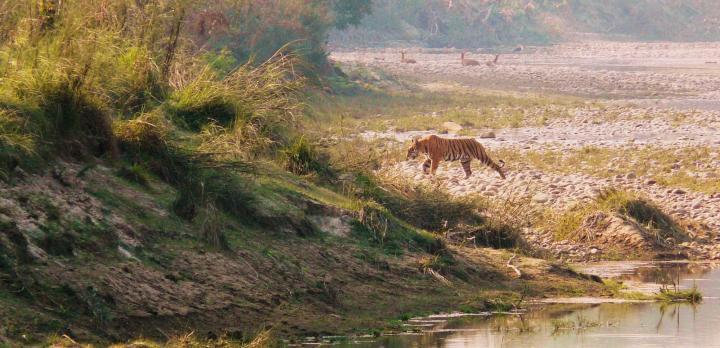 Voyage sur-mesure, Séjour au Parc National de Bardia
