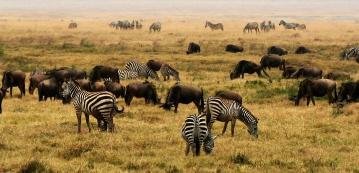 Voyage sur-mesure, Safari et Rencontres authentiques avec les tribus de Tanzanie : Maasaï, Barbaigs, Waarushas...