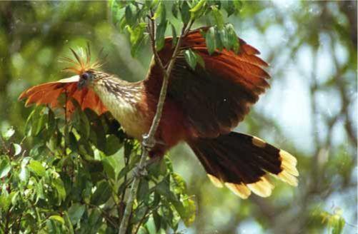 Voyage sur-mesure, Exploration de la biodiversité amazonienne