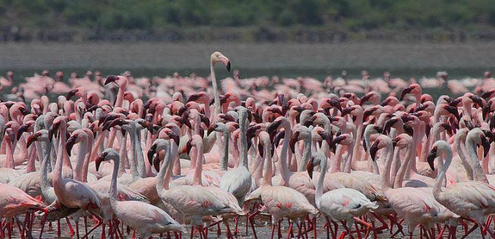 Voyage sur-mesure, Safari photo au Kenya (Nakuru, Naivasha, Baringo, Bogoria, Elementaita)
