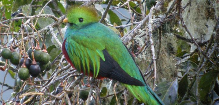 Voyage sur-mesure, Voyage en famille au Costa Rica : observations animalière, jeux d'eau, balades en forêt...