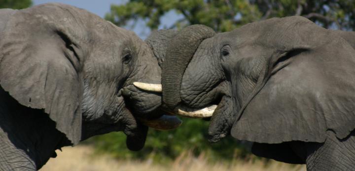 Voyage sur-mesure, Safari camping authentique au Botswana en français