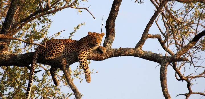 Voyage sur-mesure, Safari à pied et réserve du Kruger