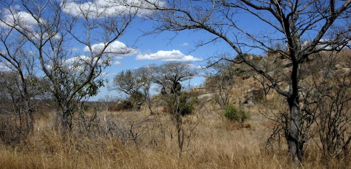 Voyage sur-mesure, Afrique du Sud, safaris à pied et en 4x4 en réserve du Kruger