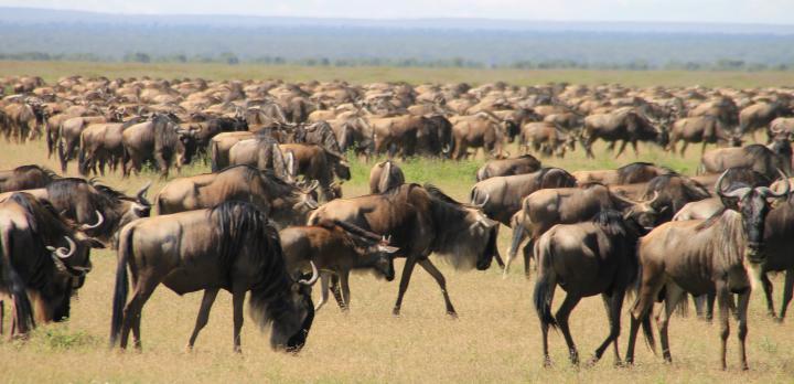 Voyage sur-mesure, Safari en famille dans les parcs de Tanzanie